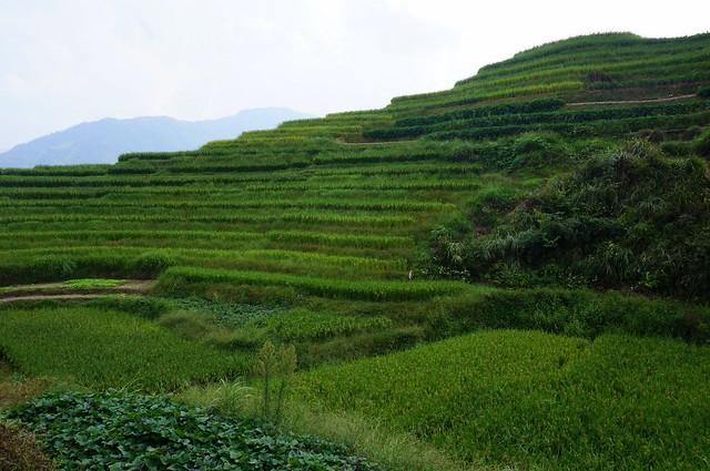 The Longji rice terraces in Guangxi
