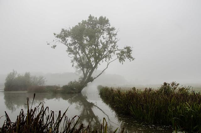 FV Flickr Top 5 (2-26) Vierde plaats: Foggy morning