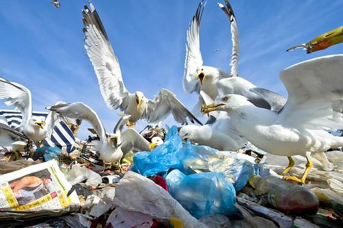 130 - Seagulls feeding place