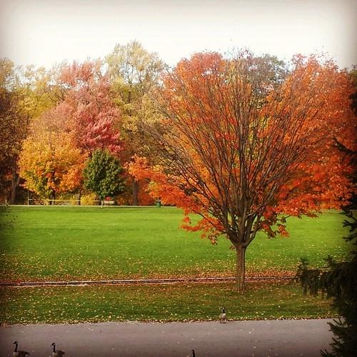 autumn trees ontario fall october squareformat hefe londonontario springbankpark instagramapp uploaded:by=instagram