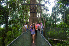 park(0.0), suspension bridge(1.0), tourism(1.0), canopy walkway(1.0), forest(1.0), rope bridge(1.0), jungle(1.0), bridge(1.0),