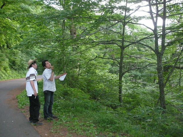 自然館の新人スタッフはブナについて研修中.