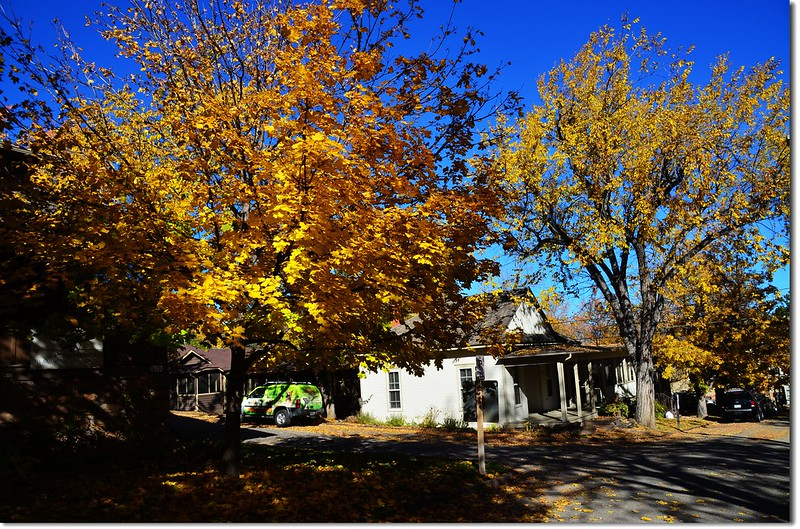 Noway maple in Fall, Chautauqua, Boulder 7