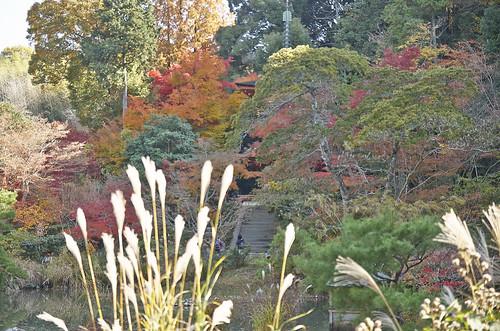 【写真】2013 紅葉 : 浄瑠璃寺/2019-08-22/IMGP3539