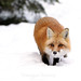 Stealthy Fox by Megan Lorenz
