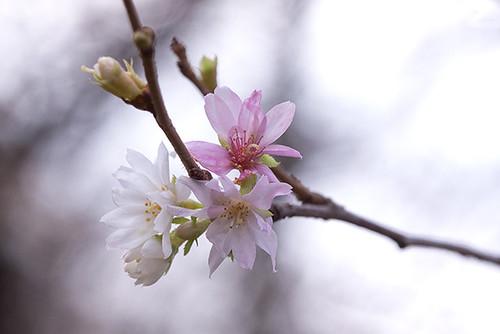11895560196 e06d3a166e Le printemps en Hiver