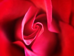 Macro red...