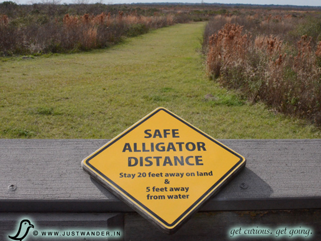PIC: La Chua Trail Warning Sign - Safe Alligator Distance: Stay 20 feet away on land and 5 feet away from water.