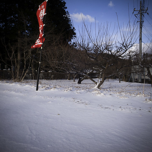 Temple Flag and Orchard, Yakushi Onsen (Hot Spring)