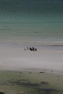114 Magelhaenpinguins bij Gypsy Cove