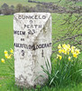 Old milestone with daffodils