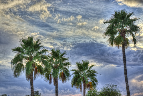 blue sunset arizona sky green phoenix clouds patterns palmtrees bluehour phoenicianresort