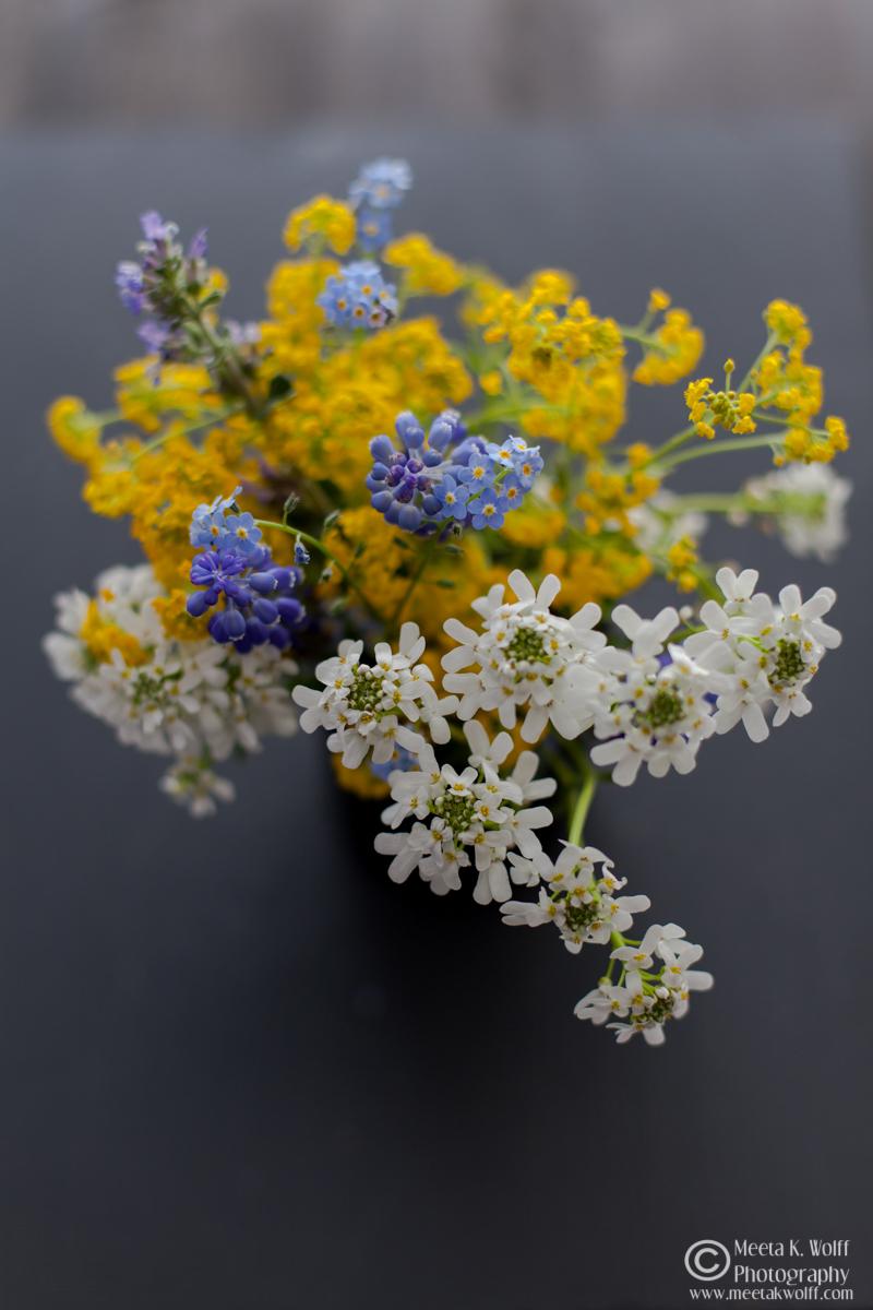Wild field flowers (0015)