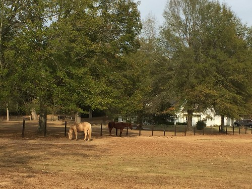 Horses in Anniston Alabama