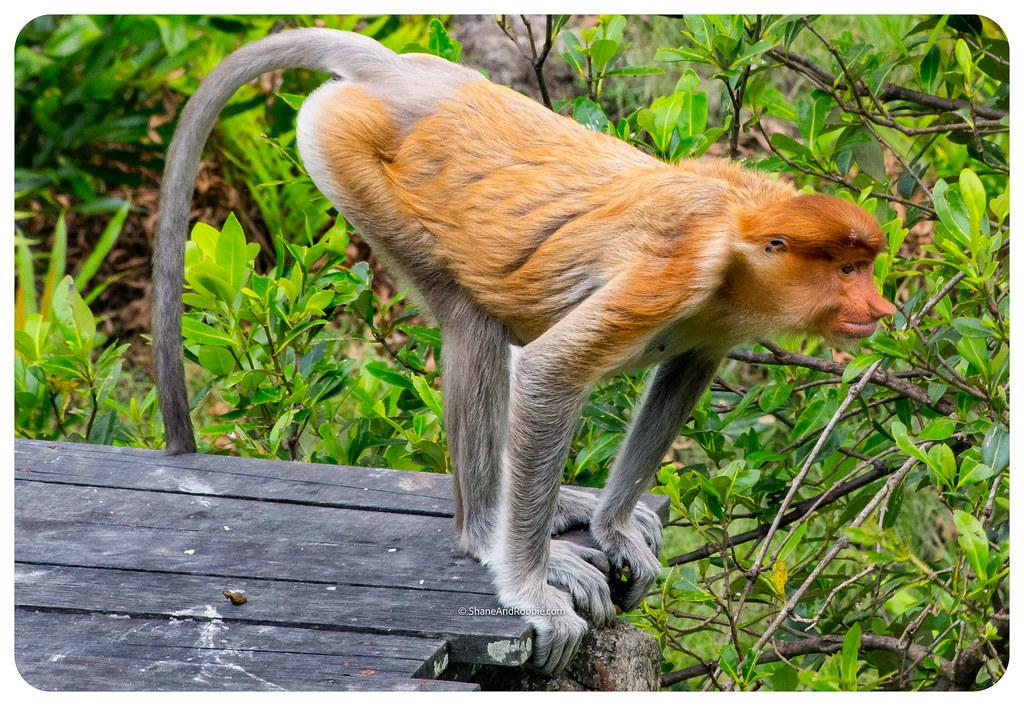 Borneo-20170413-_MG_8105