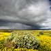 Storm moving in over the Carrizo Plains, California Valley , CA. by Donald Quintana Nature Photography