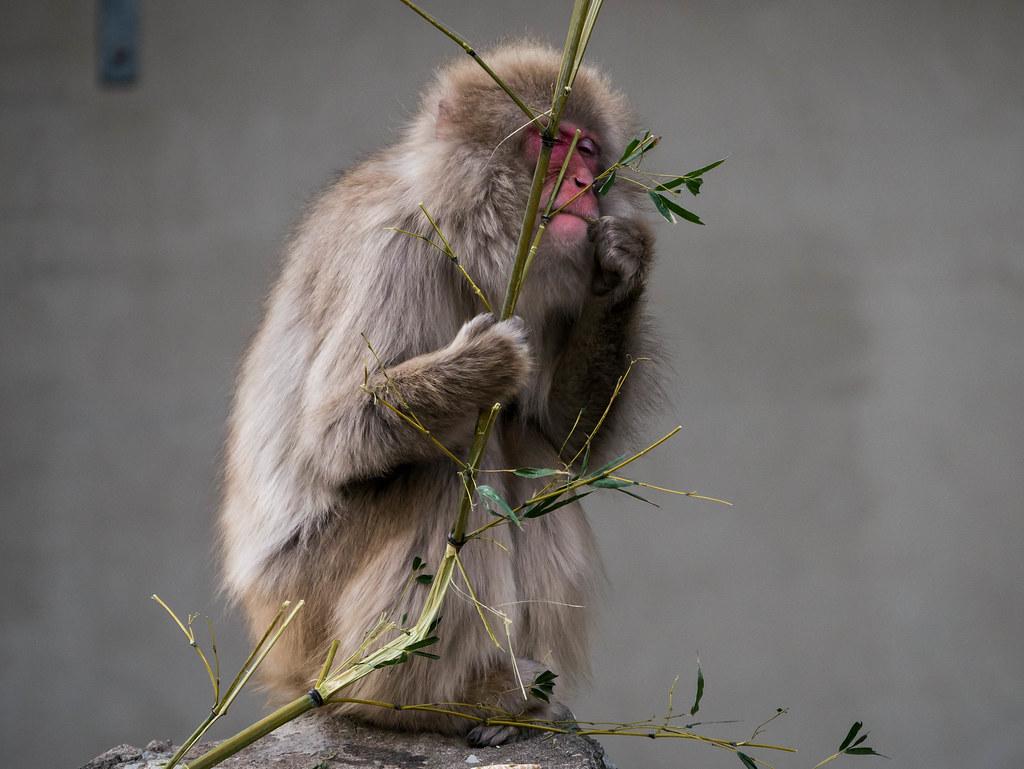 猿(むしゃ)