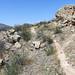 Coyote Ridge_MIN 363_33