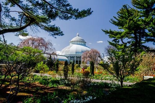 april garden nybg newyorkbotanicalgarden nikkor1855mmf3556dxvr nikond7000 bloom bloomingtree flowers landscape spring trees gdajewski dajewski tree