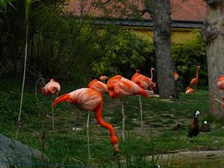 Image of Schoenbrunn Palace near Gemeindebezirk Rudolfsheim-Fünfhaus. vienna zoo austria