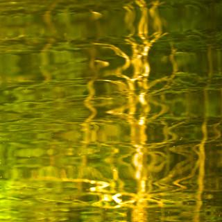 Vague reflet... un arbre mort en lumière... où est le grand pic?