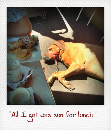 All I got was sun for lunch