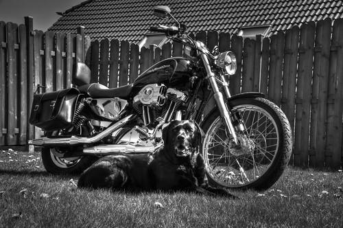 Harley Davidson SAM