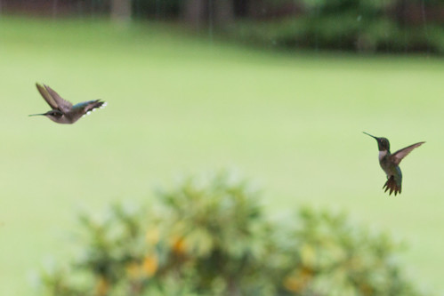 hummingbird tennessee tullahoma jeremygillard