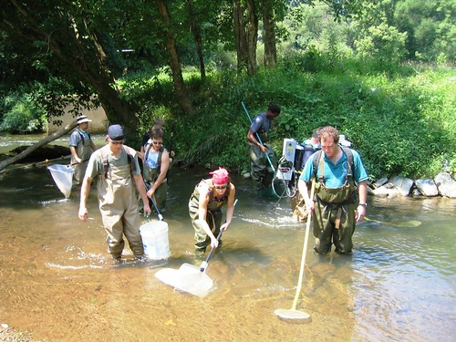 County Biologists sampling a local stream