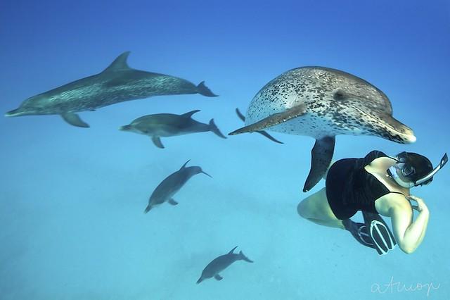 Bimini Dolphin Swim - 21/2013