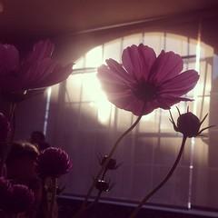 Backlit. #latergram