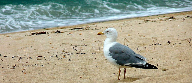 ¿Qué hacer durante el invierno en la playa?