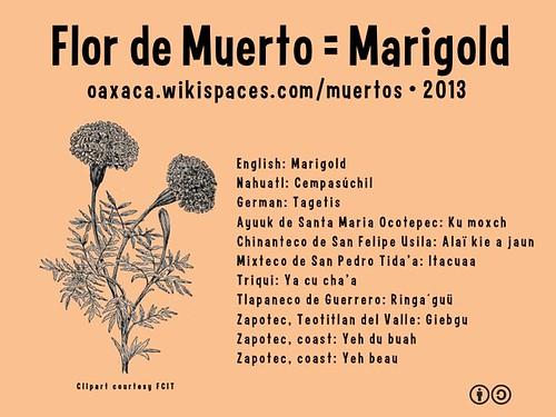 Flor de Muerto = Marigold