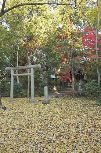 【写真】2013 紅葉 : 上御霊神社/2020-07-01/IMGP4179