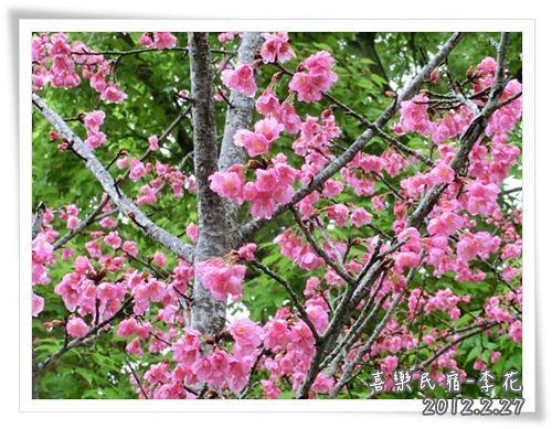 120227-晨宿裡的花草 (1)