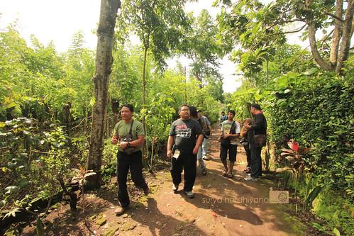 Suasana Perkebunan di Penginapan Margo Utomo, Banyuwangi
