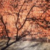 Just another branch in the wall.  #bricks & #trees  #shadows by Jaime K Scatena
