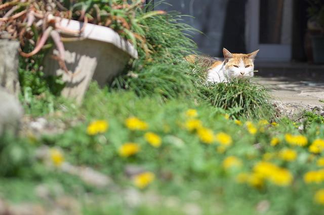 東京路地裏散歩 荒川のネコ 2014年4月5日