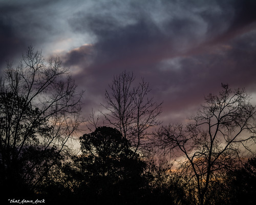 nature dusk clouds trees sunset sundown