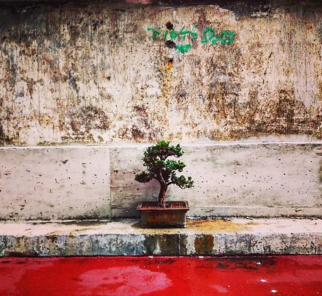 #streetphotography #street #snapshot #photographyeveryday #dailylife #yeungkwanphoto #hongkong