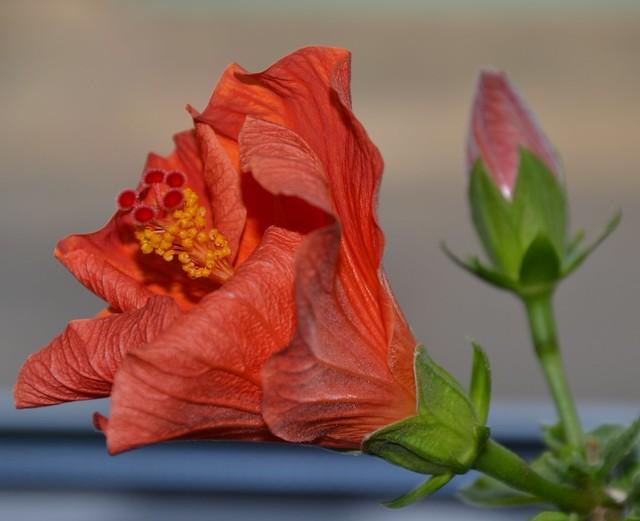 Blütentraum.......