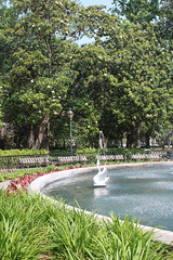 Forsyth Park Fountain with Swan and Magnolias