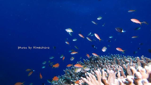 熱帯魚たち♪