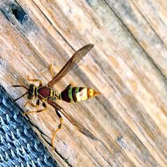 009e ~ Insect