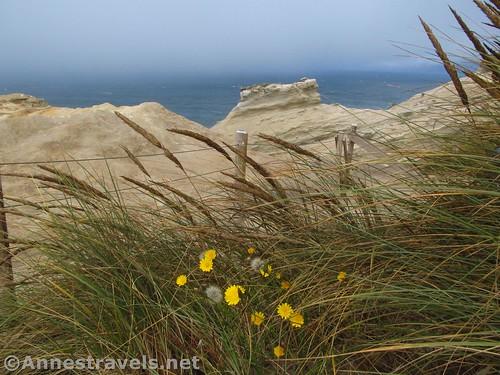 Wildflowers and sea grasses at Cape Kiwanda, Oregon