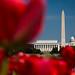 Spring in DC by hjonesphotography