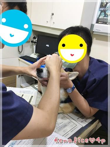 心臟健檢in專心+眼睛健檢in遠見 [2016下]