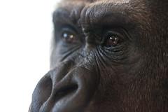 twycross zoo  -3045