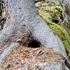 Squirrel Home