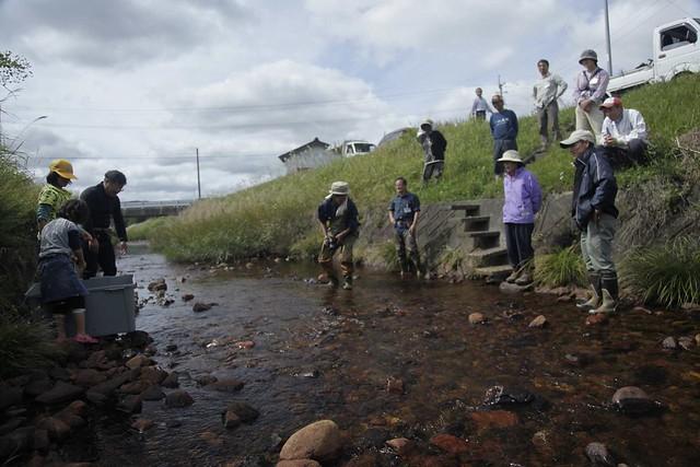 川は浅いけれど,川底は砂礫なので,産卵場所は何カ所もある.ちゃんと産んでくれるよう,みんなで見守った.